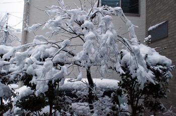 023 雪.jpg