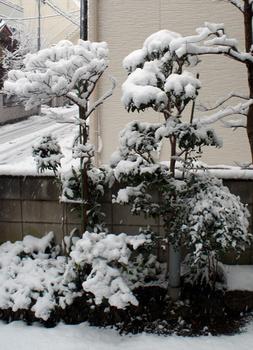 047  雪 .jpg