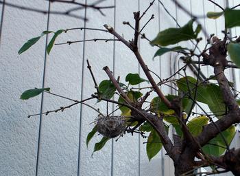 1300 小鳥の巣.jpg