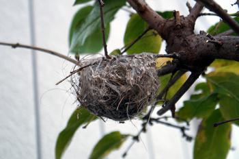 1301 小鳥の巣.jpg