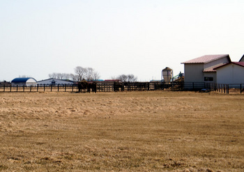256 牧場.jpg