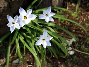 284  花にら.jpg