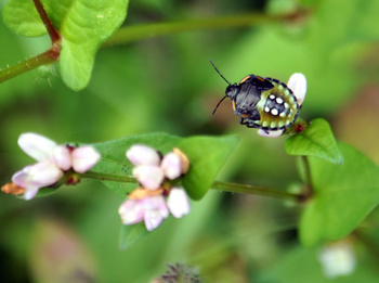 554 昆虫.jpg