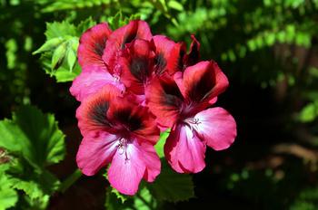 824 花.jpg