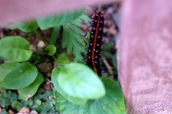 1072 幼虫.jpg