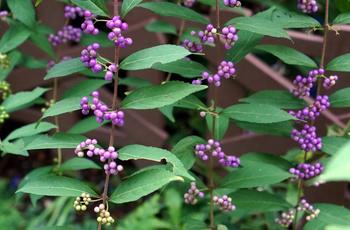 1196 紫式部.jpg