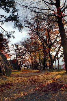 1206 盛岡城跡公園.jpg