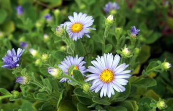 1305 花.jpg