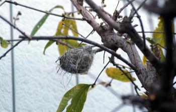 1716 小鳥の巣.jpg