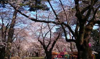 392 大宮公園.jpg